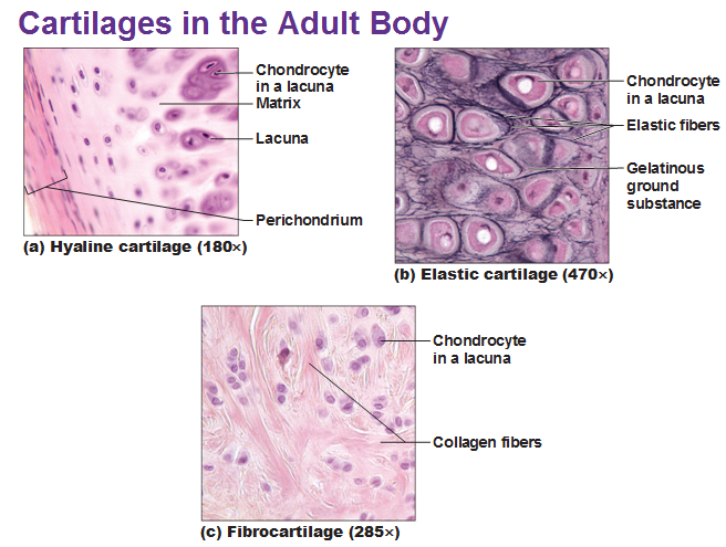 About Tissues Easton Histological Products